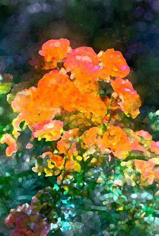 Floral Poster featuring the photograph Rose 215 by Pamela Cooper