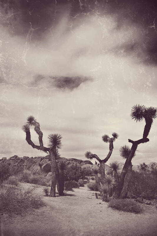Joshua Tree National Park Poster featuring the photograph Skies May Fall by Laurie Search