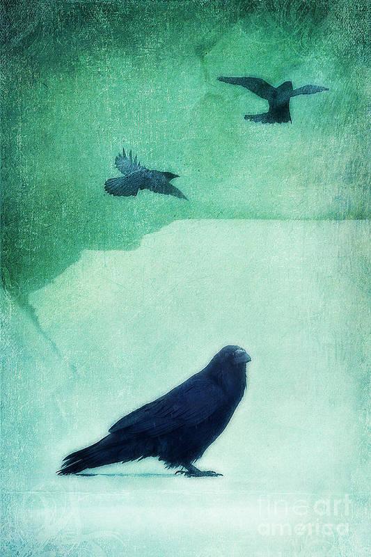 Raven Poster featuring the photograph Spirit Bird by Priska Wettstein