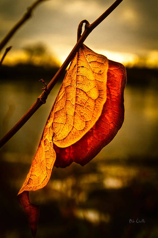 Leaf Poster featuring the photograph The Leaf Across The River by Bob Orsillo