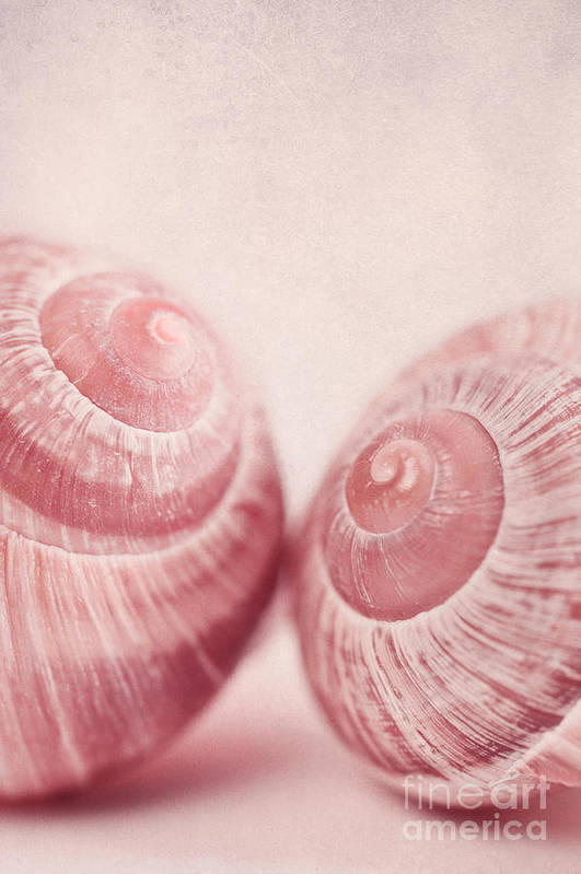Snail Poster featuring the photograph Togetherness by Priska Wettstein