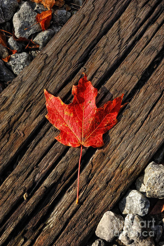 Red Leaf Poster featuring the photograph Uniquely Red by Pamela Baker
