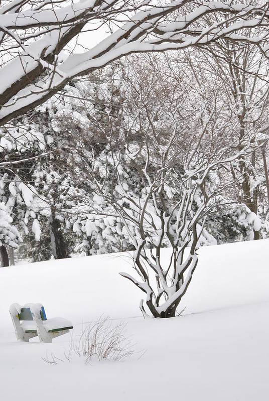 Winter. Snow Poster featuring the photograph Winter Bench by Frederico Borges