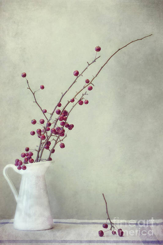 Apple Poster featuring the photograph Winter Still Life by Priska Wettstein