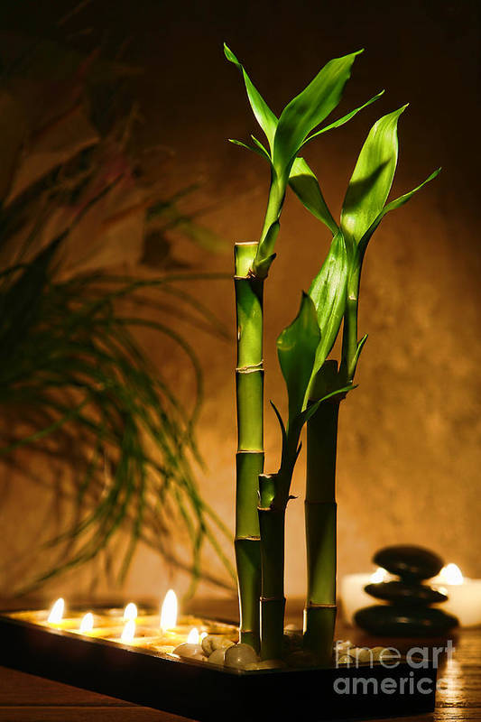 Bamboo Poster featuring the photograph Zen Time by Olivier Le Queinec