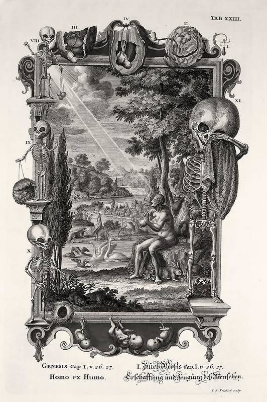 Bible Poster featuring the photograph 1731 Johann Scheuchzer Creation Of Man by Paul D Stewart