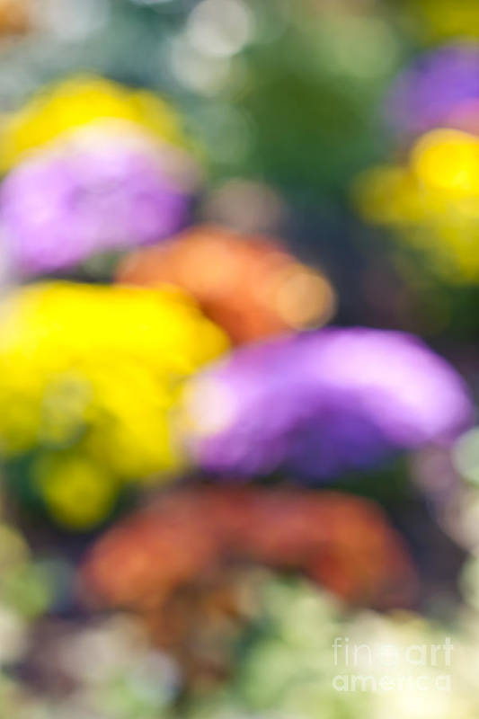 Flower Poster featuring the photograph Flower Garden In Sunshine by Elena Elisseeva