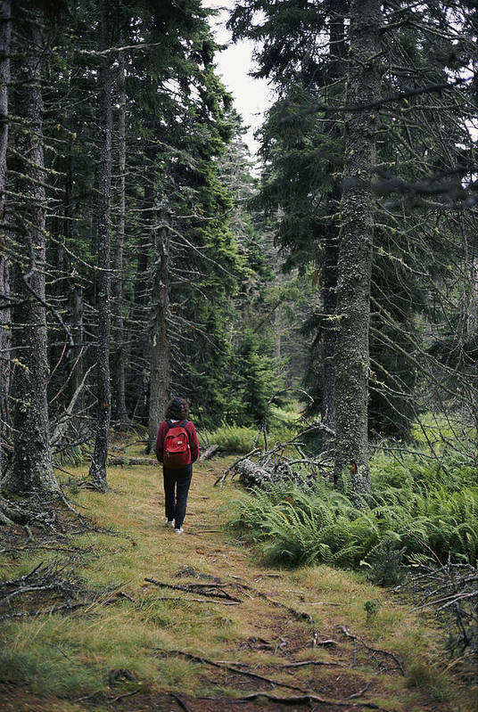 isle Au Haut Poster featuring the photograph A Lone Hiker Enjoys A Wooded Trail by Tim Laman