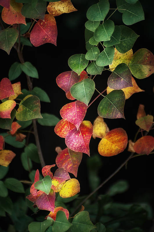 Autumn Poster featuring the photograph Autumn Color by Brenda Bryant