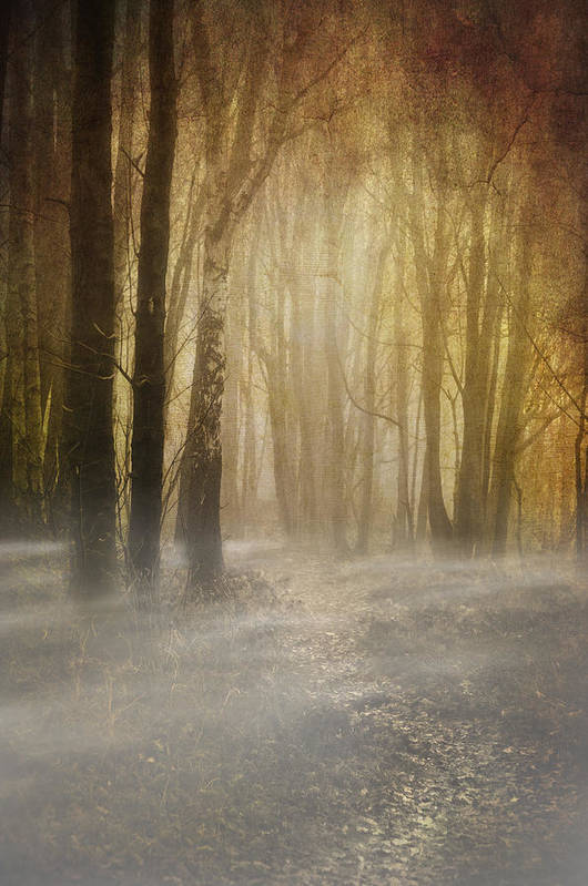 Woodland Poster featuring the photograph Beware Misty Woodland Path by Meirion Matthias