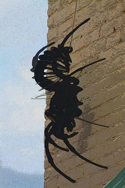 Black Poster featuring the photograph Black Widow Spider Art by Karon Melillo DeVega