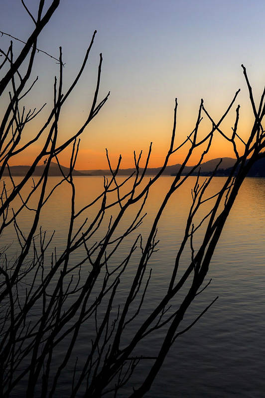 Silhouette Poster featuring the photograph Branches In The Sunset by Joana Kruse