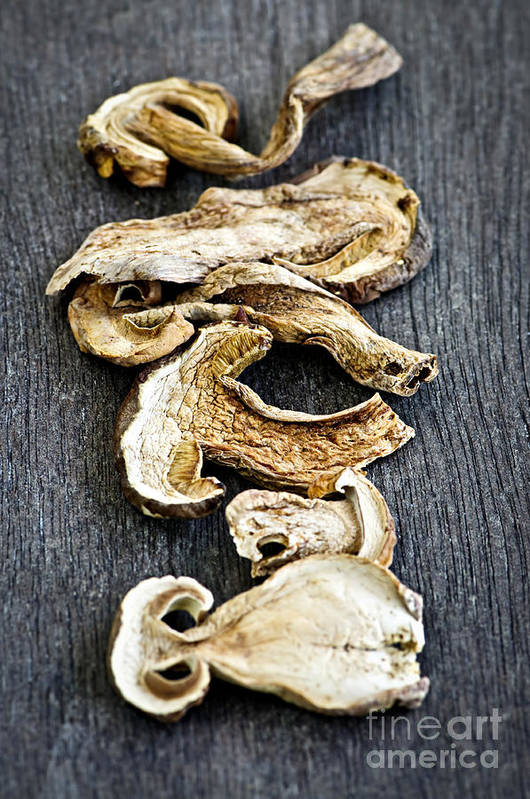 Porcini Poster featuring the photograph Dry Porcini Mushrooms by Elena Elisseeva
