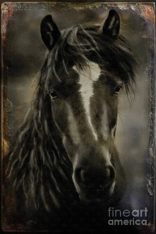 Horse Poster featuring the photograph From The Mist by Davandra Cribbie