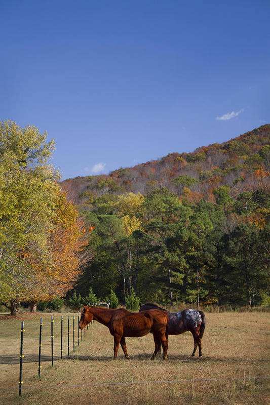 Horse Poster featuring the photograph Horses And Autumn Landscape by Kathy Clark