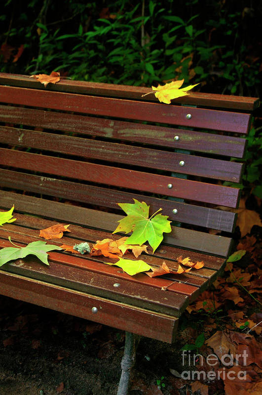 Autumn Poster featuring the photograph Leafs In Bench by Carlos Caetano
