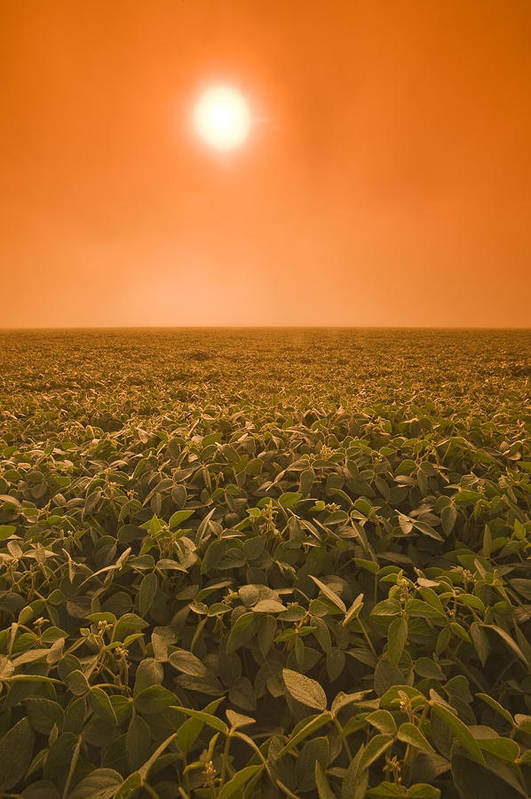 Colour Image Poster featuring the photograph Soybean Field On A Misty Morning by Dave Reede