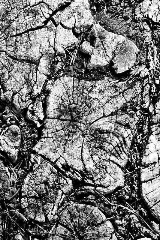 Tree Stump Poster featuring the photograph Stumped by Mike McGlothlen