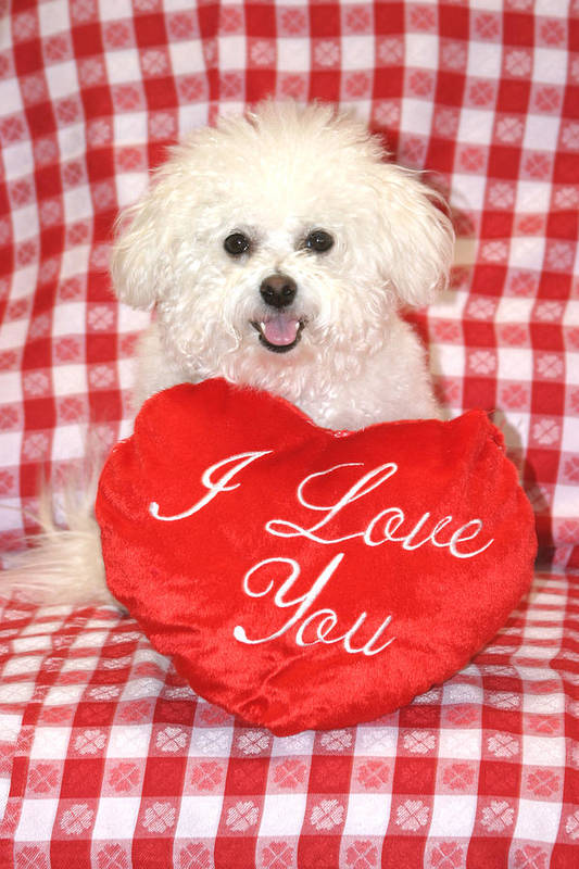 Animal Poster featuring the photograph Fifi Loves You by Michael Ledray