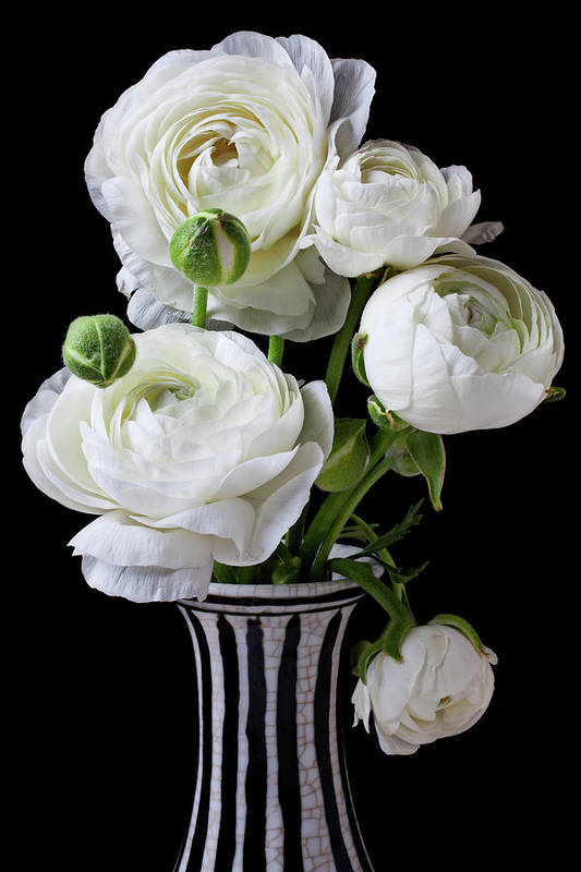 White Ranunculus Flower Vase Floral Poster featuring the photograph White Ranunculus In Black And White Vase by Garry Gay