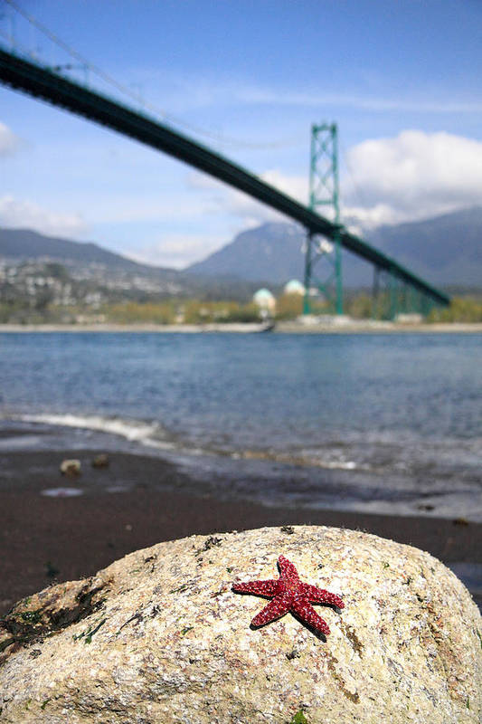 Star Fish Poster featuring the photograph Starfish Stanley Park Vancouver by Pierre Leclerc Photography