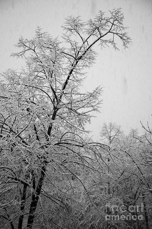 Winter Poster featuring the photograph Winter by Gabriela Insuratelu