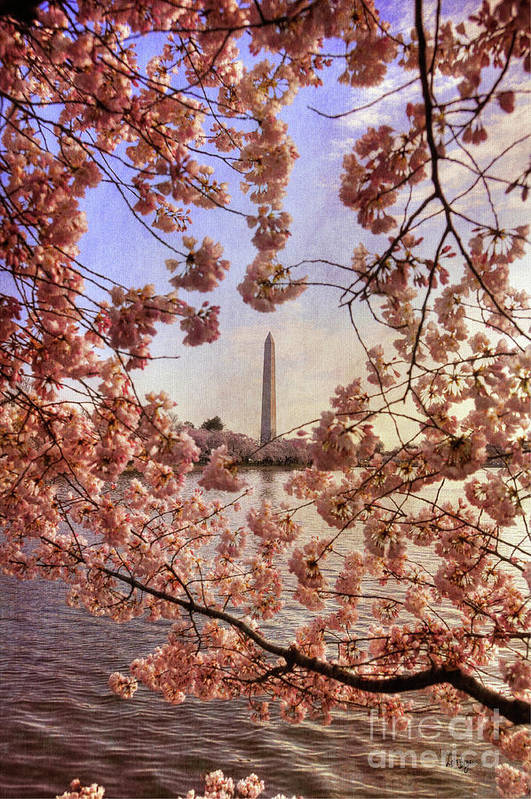 Cherry Blossoms Poster featuring the photograph Cherry Blossoms And The Washington Monument by Lois Bryan