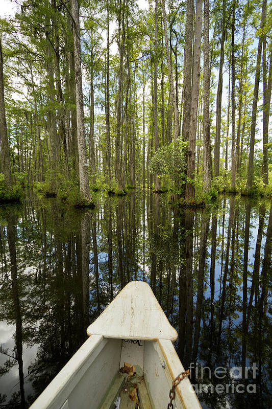 Cypress Gardens Poster featuring the photograph Cypress Garden Swamp by Dustin K Ryan