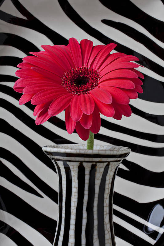 Gerbera Daisy Flower Vase Stripes Poster featuring the photograph Gerbera Daisy In Striped Vase by Garry Gay