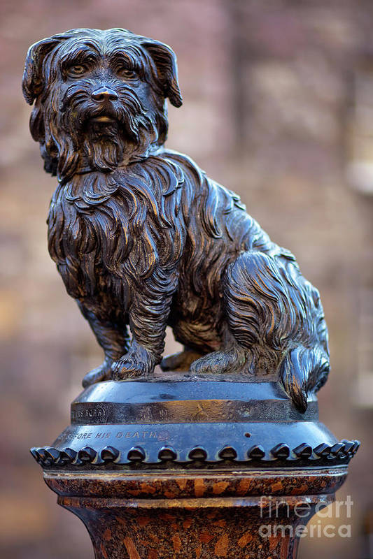 Bobby Poster featuring the photograph Greyfriars Bobby by Andre Goncalves
