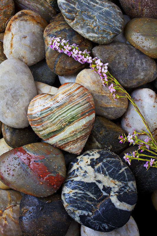 Wet Poster featuring the photograph Heart Stone With Wild Flower by Garry Gay