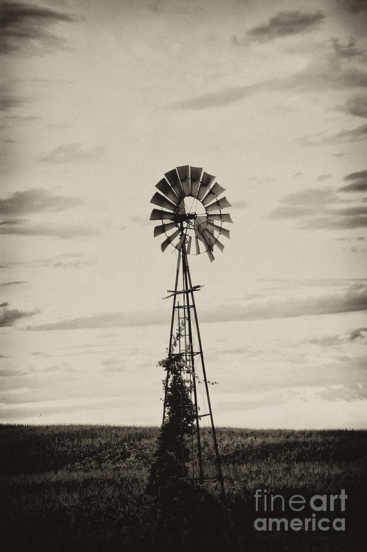 Iowa Poster featuring the photograph Iowa Windmill In A Corn Field by Wilma Birdwell