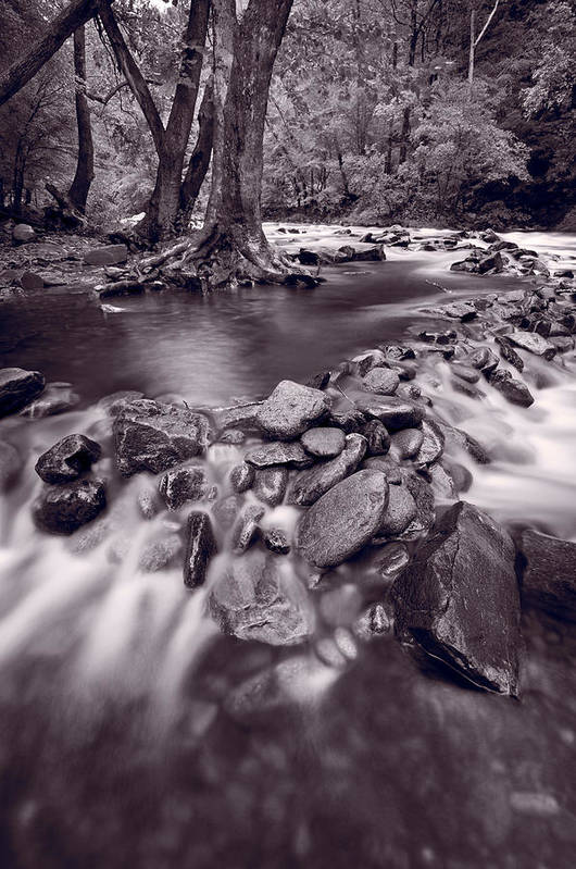 Great Poster featuring the photograph Pigeon Forge River Great Smoky Mountains Bw by Steve Gadomski