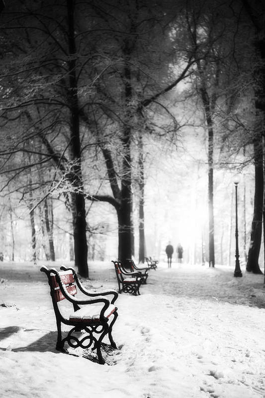 Winter Poster featuring the photograph Red Benches In A Park by Jaroslaw Grudzinski