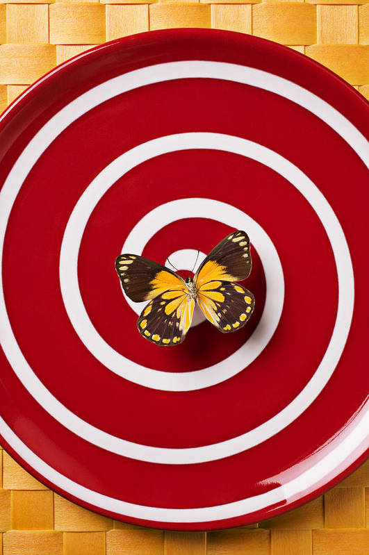 Butterfly Poster featuring the photograph Red Plate And Yellow Black Butterfly by Garry Gay