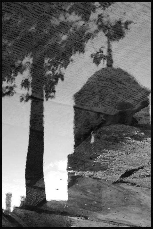 Black And White Poster featuring the photograph Reflections by Julia Bridget Hayes