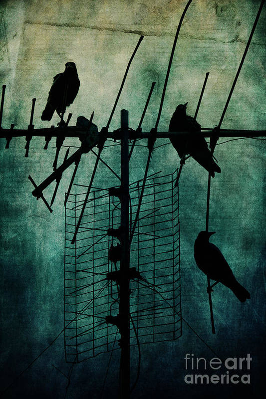 Crows Poster featuring the photograph Silent Threats by Andrew Paranavitana