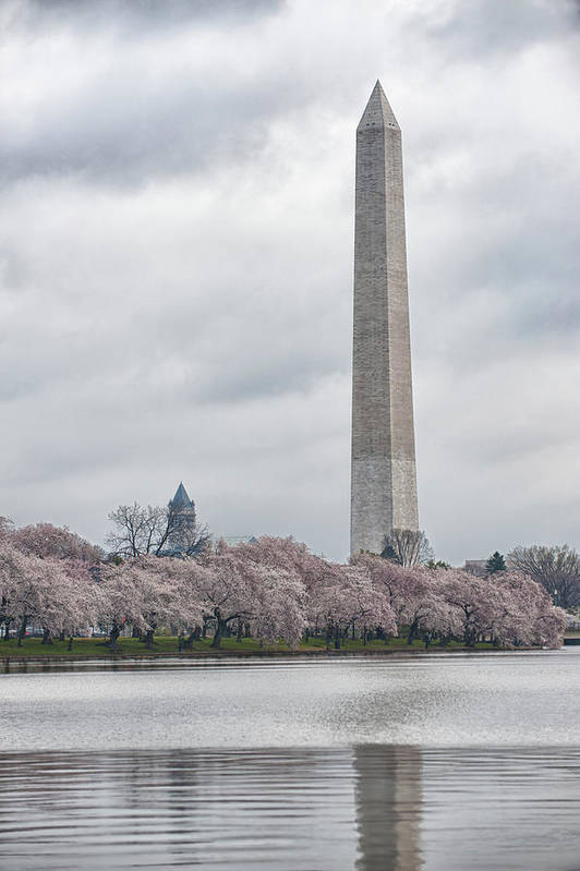 Washington D.c. Photographs Poster featuring the photograph Washington Monument During Cherry Blossom Festival by Sebastian Musial