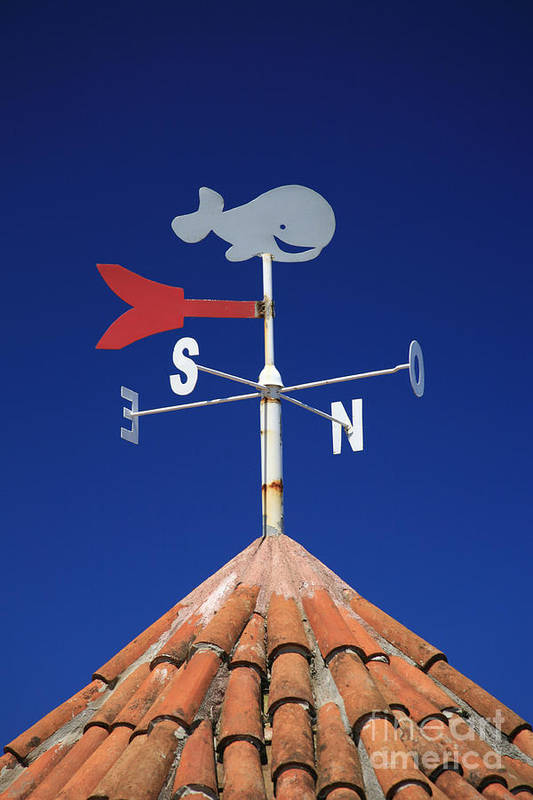 Whale Poster featuring the photograph Whale Weather Vane by Gaspar Avila