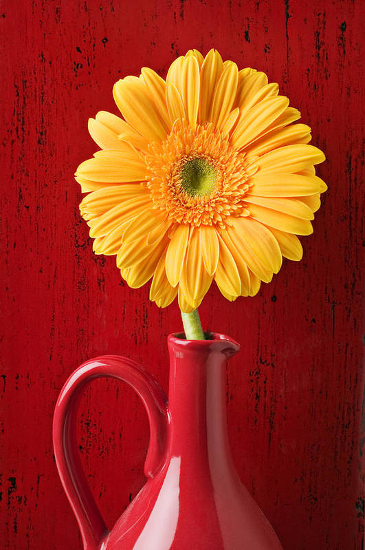 Daisy Poster featuring the photograph Yellow Daisy In Red Vase by Garry Gay