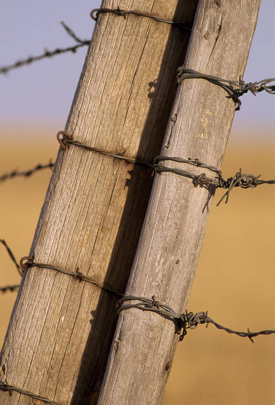 Outdoor Poster featuring the photograph Gate Posts Join A Barbed Wire Fence by Gordon Wiltsie
