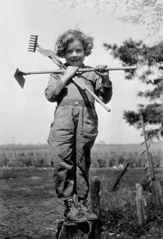 6-7 Years Poster featuring the photograph Young Gardener by Henry Guttmann