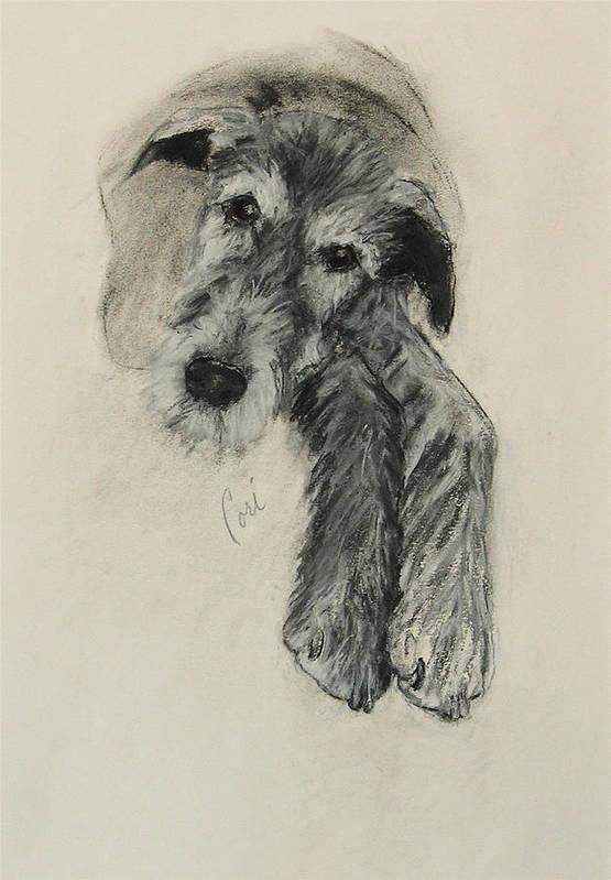 Irish Wolfhound Poster featuring the drawing Luck Of The Irish by Cori Solomon