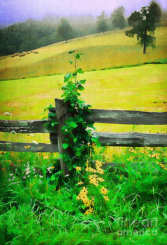 Agriculture Poster featuring the photograph Roadside Beauty by Darren Fisher