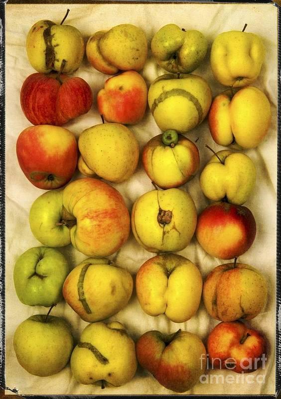 Aging Process Poster featuring the photograph Apples by Bernard Jaubert