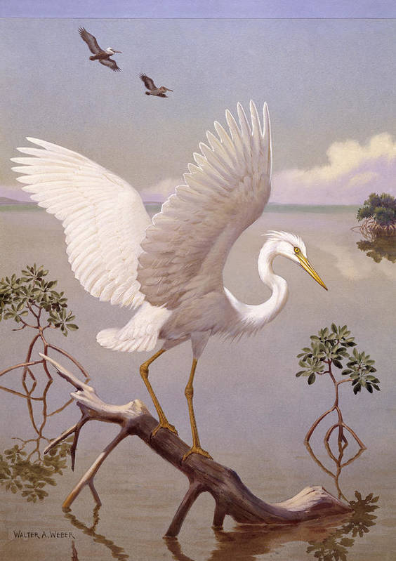 Illustration Poster featuring the photograph Great White Heron, White Morph Of Great by Walter A. Weber