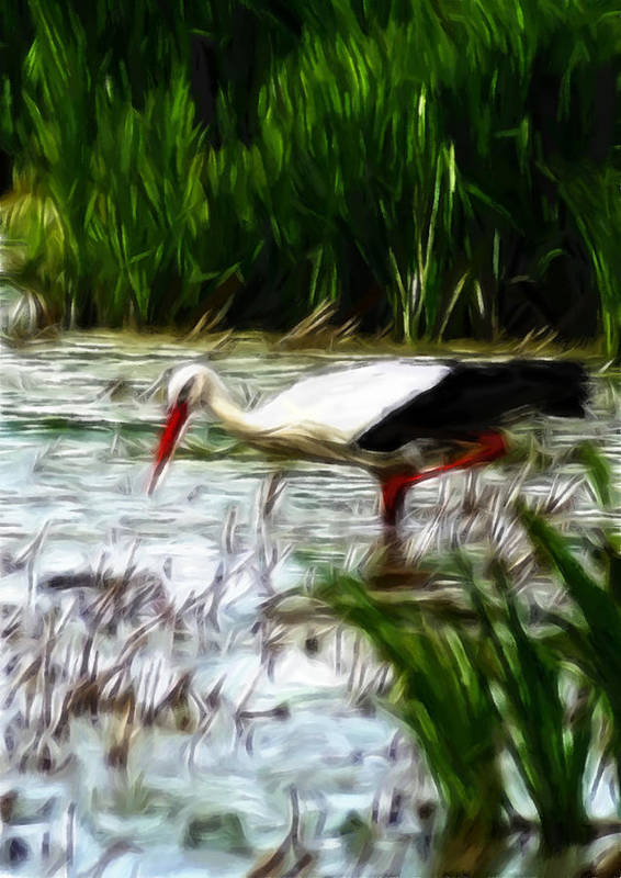 Stork Nature Water Lake Fishing Frog Reed Grass Landscape Animal Bird Luck Poster featuring the pastel The Stork by Stefan Kuhn