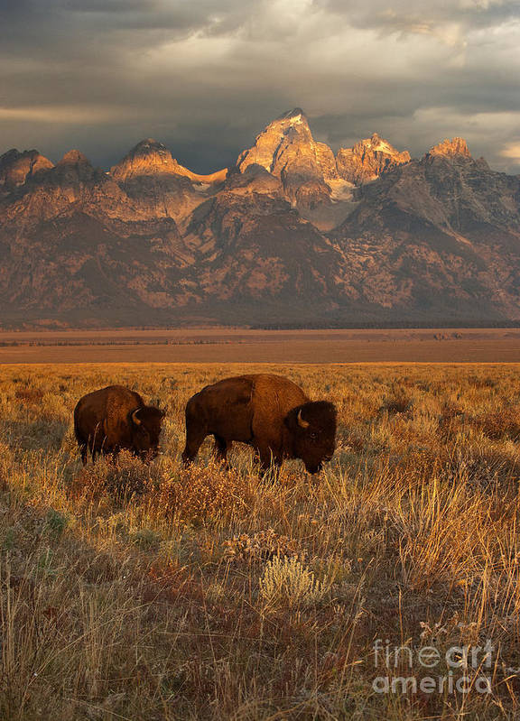 Grand Teton Poster featuring the photograph Morning Travels In Grand Teton by Sandra Bronstein