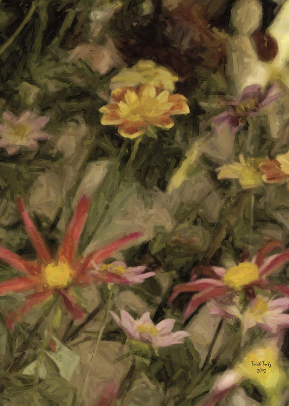 Flower Poster featuring the photograph Prettier Than A Presidential Debate by Trish Tritz