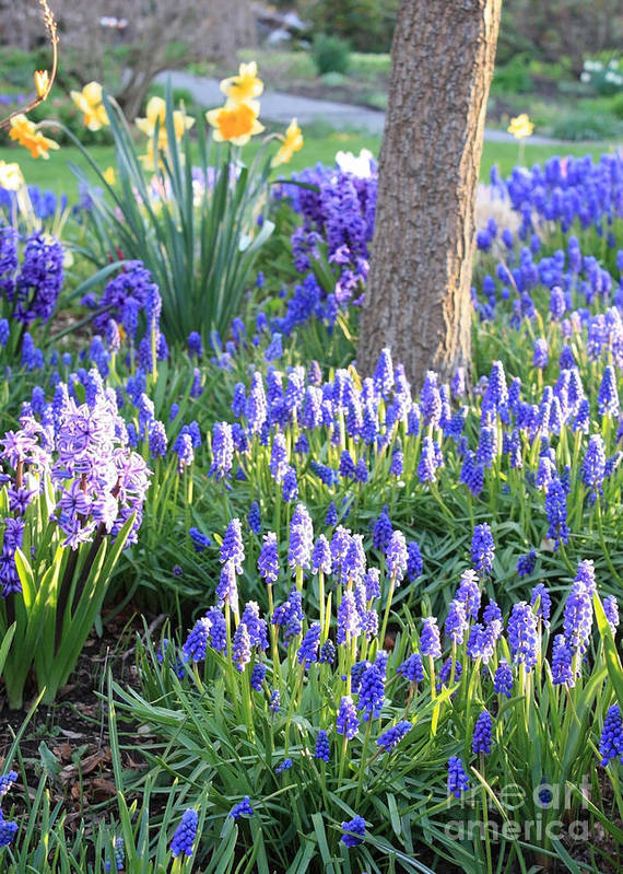 Spring Garden Poster featuring the photograph Beautiful Spring Day by Carol Groenen